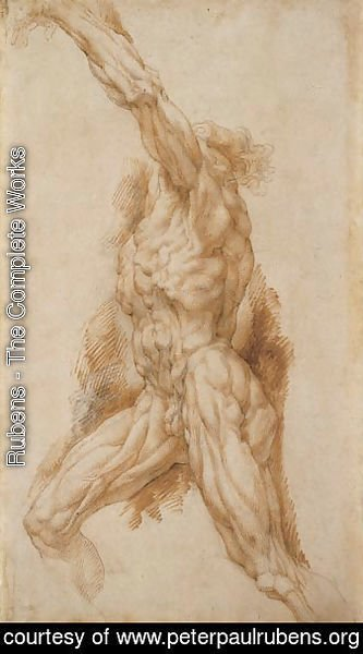 Anatomical Study of a Man Reaching Up to the Left