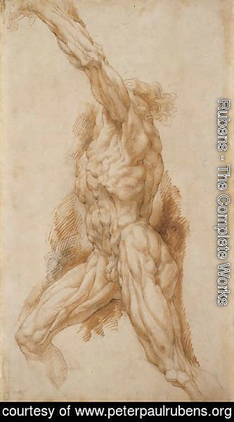 Rubens - Anatomical Study of a Man Reaching Up to the Left