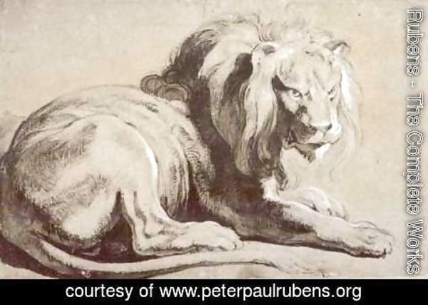 Rubens - Etude of lion