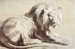 Etude of lion